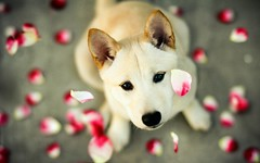 Dogs Enjoy (monicayeei) Tags: dog love homecat young outdoor funny dogs recent news top super