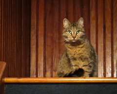 Kitty on the landing (hickamorehackamore) Tags: canon bestfriend cat kitty rescuekitty teaparty