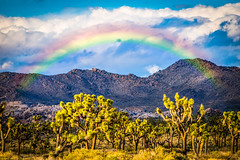 Joshua Tree National Park Rainbow! Breaking Storm Sunset Fine Art Landscapes (45SURF Hero's Odyssey Mythology Landscapes & Godde) Tags: sunset storm tree art nature clouds landscape landscapes losangeles rainbow nikon gallery joshua fineart fine joshuatree thunder breaking naturephotography landscapephotography d810 fineartphotos fineartphotographer fineartnature elliotmcgucken nikond810photos elliotmcguckenfineart