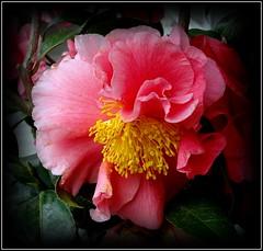 Natural Wonder (dimaruss34) Tags: newyork flower brooklyn image dmitriyfomenko spring62015