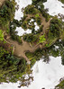 Garden Paths (Lee Rosenbaum) Tags: panorama plants abstract architecture vancouver stairs landscape britishcolumbia 360degree mathmap quincuncial theta360 ricohthetas