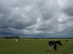 Dutch cows and Weather (Johan Moerbeek) Tags: dutch cows koe weide gras grass boerderij farm noordholland nederland heiloo egmonderpolder