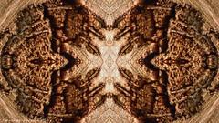 huellas del tiempo (ojoadicto) Tags: arbol tree madera wood mirror abstract abstracto nature naturaleza artisticphotography digitalmanipulation