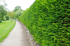 Hecke // Hedge (frankbehrens) Tags: schaalsee mecklenburg biospherereserve biosphrenreservat