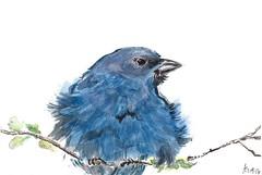 Fluffy Bluebird (SpedBug) Tags: bird nature watercolor bluebird