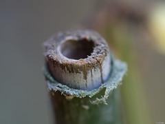 Una caa al aire (Luicabe) Tags: agujero cabello caa enazamorado exterior gua luicabe luis macrofotografa madera plstico profundidaddecampo textura yarat1 zamora