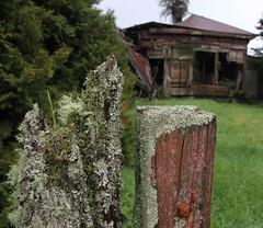 Lichen the Ruin (Tones Corner) Tags: westcoast derelicthouse oldbuilding fencepost lichen rustic ruin