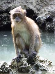 Koh Panak (Sea Kayaking), Thailand (Jan-2016) 21-103 (MistyTree Adventures) Tags: kohpanak kohpanakisland aophangnganationalpark seasia thailand phuket panasoniclumix outdoor phangngabay water lagoon limestone animal monkey macaque macaquemonkey