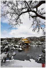 Kinkaku-ji in winter, Kyoto, Japan (Damien Douxchamps) Tags: japan  japon kansai  kinki  kyoto   ukyo ukyou west western kinkakuji  temple     unescoworldheritage snow  pond japanesegarden  gold  bellflowerwindow