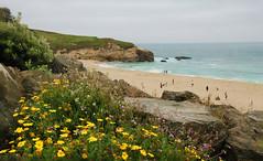 Moss Beach, California (Gail K E) Tags: california usa beach coastline cliffs mossbeach halfmoonbay pacificocean sanfrancisco