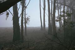Tumorrama NSW, 2016 (jamiehladky) Tags: tumorrama nsw australia fire smoke forest bushfire tree trees eucalyptus film 120 6x9 portra400 portra gw690 gw690iii jamiehladky hladky mediumformat haze