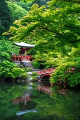 (蔡藍迪) Tags: japan japanese japanesegarden d600 nikon nidomenokyoto kyoto 京都 日本 關西 nipon 醍醐寺 daigoji daigo 50mm 18g 二度目の京都