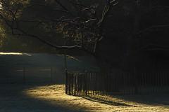 _MG_0756R Catch the Morning, Jon Perry - Enlightenshade, 22-2-15 zah (Jon Perry - Enlightenshade) Tags: morning sunlight london dawn frost earlymorning frosty chiswick lowsun w4 chiswickhouse earlylight 22215 jonperry chiswickhouseandgrounds chiswickhousegrounds enlightenshade arranginglightcom 20150222