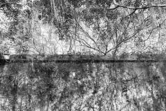 DP2M1196 (Shinfinn Lee) Tags: trees wall blackwhite 4 sigma embankment foveon dp2m