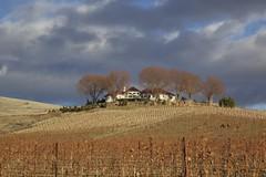 Owen Roe Winery area (Getting Better Shots) Tags: desert arid winecountry easternwashington