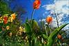 PETALES ET COULEURS (Gilles Poyet photographies) Tags: fleurs soe auvergne puydedôme autofocus royat aplusphoto parcthermal artofimages rememberthatmomentlevel1