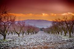 Los llanos y Sierra Nevada (Alhama de Granada) (Lucas Gutirrez) Tags: paisajes granada invierno sierranevada losllanos almendros alhama granadanatural lucasgutierrezjimenez