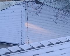 P1070014 (Paul Henegan) Tags: winter snow rooftops branches f56 goldenhour steinheilmnchenecassarit128f45mmsn1617967