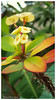 Flowers (Rhannel Alaba) Tags: flower samsung smartphone pido alaba note4 rhannel