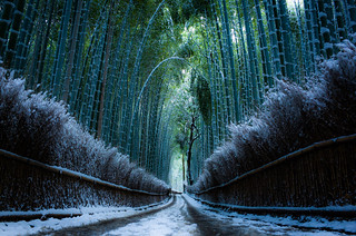 the path of bamboo, revisited #30 (Sagano, Kyoto)