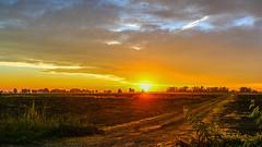 At sunrise (sergio serra1) Tags: sun sunrise landscape alba natura mantova sole paesaggio poggiorusco nginationalgeographicbyitalianpeople