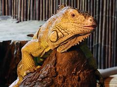 DSCF0052_edited-1 (Daves Portfolio) Tags: animals somerset longleat safaripark 2014