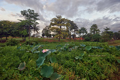A Famosa Resort | Scenery 2 (Shamsul Hidayat Omar) Tags: tourism sunrise landscape photography interesting nikon scenery lotus cloudy places scene resort malaysia omar hdr melaka d3 malacca famosa hidayat greatphotographers a shamsul photoengine oloneo