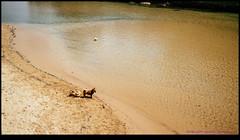 150222-8207-EOSM.jpg (hopeless128) Tags: dogs water river sydney australia newsouthwales dogwalk queenscliff 2015 opalsunday manlylogoon