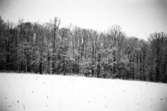 The Woods (Daniel Regner) Tags: new winter bw white snow black cold 120 nature weather contrast lens landscape prime freedom coast landscapes woods natural scanner pennsylvania snowy earth daniel wide january rangefinder east iso pa xp2 400 handheld epson 1998 6x9 medium format asa expired 90mm ilford fujica fujinon ebc stopping f35 2015 v500 gw690 regner
