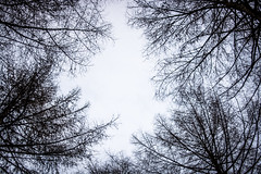 Minimalist Forest (Harry Bowden Photography) Tags: sky tree forest 35mm nationalpark spring derwent derbyshire peakdistrict atmosphere negativespace peaks minimalist unsprung nikond5200