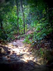 TRAKS-Trail-Day-Feb-2015-013 (Traks Of Malaysia) Tags: mountainbike malaysia mtb traks trailbuilding bukitkiara