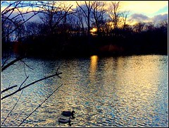~~ March Sunset at the Lake ~~ (Rosa Dik 009 -- catching up !) Tags: light sunset lake reflection colors clouds composition flickr ducks atmosphere loweraustria wienerneustadt photographystudy iphone5s march2015 rosadik2009