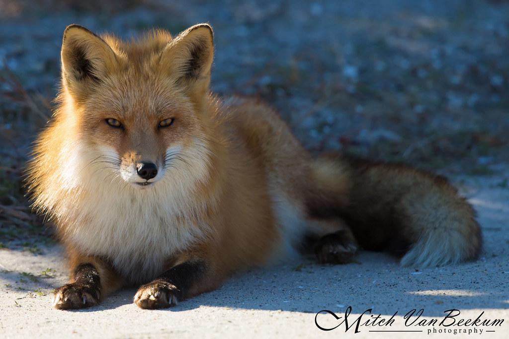 oooooh, Foxy Lady!