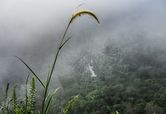 Spider Web (voxpepoli) Tags: sigiriya centralprovince srilanka fog mist spider web spiderweb clouds mountain jungle green