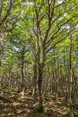 Bearded Forrest (m.gallenkamp) Tags: chile nature forrest natur wald puntaarenas usnea reservanacionalmagallanes bartflechte