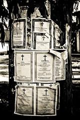 Parish News? (paul139) Tags: zakynthos zante church religion cross crucifix tree greece nikon nikonf5 rodinal film analogue blackandwhite apx100 agfa outdoor