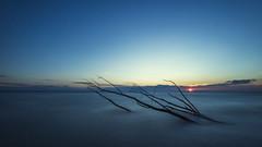 unoquattroquattronove (Dario Cogliati) Tags: entella entellariver fiume dariocogliati longexposure filternd sea mare sunset sun tramonto horizon nature natura sky tree albero