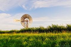 Golden American windmill (Johan Konz) Tags: sunny evening kalverpolder netherlands outdoor grass field sunset blue sky white clouds nikon d90 landscape serene athmosphere dike polder dewijdewormer watermill mill dehercules american windmotor