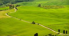 Terrapille , au pied de Pienza ... (jean-marc losey) Tags: primavera spring italia vert pienza toscana sentiero toscane printemps italie chemin champ cyprs d700 terrapille
