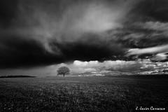 Plata (AvideCai) Tags: arbol paisaje cielo nubes largaexposicin sigma1020 avidecai