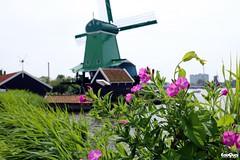 Zaanse Schans The Netherlands (JanJGorter) Tags: holland netherlands windmills zaanseschans zaandam molens