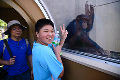 2016 北海道D6 4x6 3205 (chaochun777) Tags: 北海道 旭山 動物園 露營 自由行 猴子 長臂猿 猩猩 雲豹 花豹 老虎 獅子 北極熊 企鵝