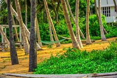 Samarpan GuestHouse Surroundings (wandercrumbs) Tags: surroundings trees rest areas samarpan guest house auroville beach pondicherry puducherry