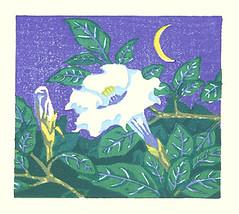 Downy thorn-apple (Japanese Flower and Bird Art) Tags: flower downy thornapple datura metel solanaceae yoshitaka nakao modern woodblock print japan japanese art readercollection