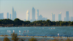 Dubai Lagoon (kate willmer) Tags: water lagoon flamingos skyscraper sky light trees sunshine dubai