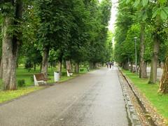 Cluj-Napoca - Central Park (Bogdan Pop 7) Tags: romnia romania roumanie transylvania transilvania erdely erdly ardeal cluj clujnapoca kolozsvr klausenburg kolozsvar 2016 romnia park parc parculmare parculcentral parculsimionbarnutiu vara var summer nyr