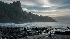 (zwierzory) Tags: tenerife teneryfa canarian islands wyspy kanaryjskie