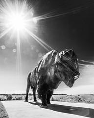 Worlds Largest Buffalo Jamestown ND 2016 Lauri Novak (LauriNovakPhotography) Tags: discoverjamestownnd tatonka buffalo roadsideattraction northdakota frontiervillage starburst northdakotalegendary