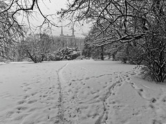 Winter in Stettin (TomasLudwik) Tags: winter snow zima snieg szczecin stettin bw blackandwhite