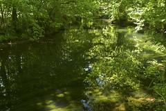 Le ruisseau de Sare (Michel Seguret Thanks for 14.6 M views !!!) Tags: france aquitaine pyrénéesatlantiques paysbasque euskalherria euskadi été summer michelseguret nikon d800 pro report reportage euskal
